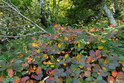 Stock Photo: 1848-463359 Autumnal trees and shrubs in Plitvice Lakes National Park, Plitvice Jezera, Croatia, Europa