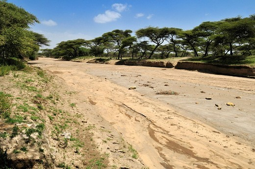 Stock Photo: 1848-466437 Dry riverbed in an acacia forest, Rift Valley, Oromia, Ethiopia, Africa