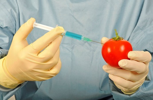Chemist in sterile work clothes with syringe and tomato, symbolic image of genetically modified food, or food treated with pesticides : Stock Photo