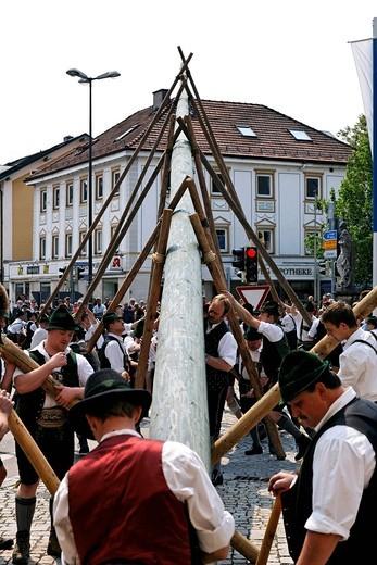 Stock Photo: 1848-470013 Maypole being raised, Prien, Chiemgau, Upper Bavaria, Germany, Europe