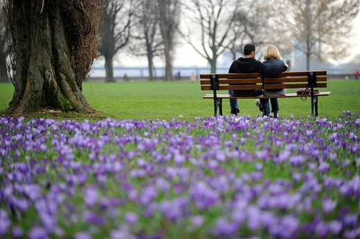 Crocus meadow and couple on a bench, spring : Stock Photo
