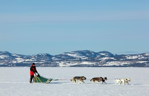 Stock Photo: 1848-475029 Man, musher running, driving a dog sled, team of sled dogs, Alaskan Huskies, mountains behind, frozen Lake Laberge, Yukon Territory, Canada