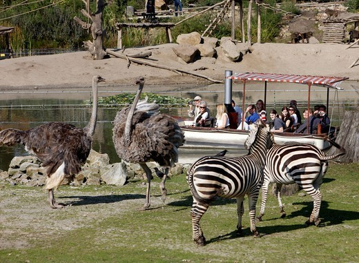 Savannah at a lake, enclosure with various African animals, Zoom Erlebniswelt zoo, Gelsenkirchen, Ruhrgebiet area, North Rhine_Westphalia, Germany, Europe : Stock Photo