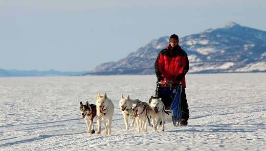 Stock Photo: 1848-475053 Man, musher running, driving a dog sled, team of sled dogs, Alaskan Huskies, frozen Lake Laberge, Yukon Territory, Canada