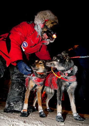 Stock Photo: 1848-475868 4 time champion Lance Mackey thanking his dogs after arriving in Dawson City, Yukon Quest 1, 000_mile International Sled Dog Race 2010, Yukon Territory, Canada