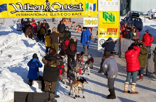 Stock Photo: 1848-475874 Dog musher Normand Casavant and his team arriving in Dawson City, Yukon Quest 1, 000_mile International Sled Dog Race 2010, Yukon Territory, Canada