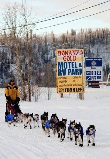 Dog musher Zack Steer leaving Dawson City, Yukon Quest 1, 000_mile International Sled Dog Race 2010, Yukon Territory, Canada : Stock Photo