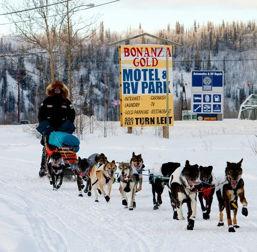 Dog musher Ken Anderson leaving Dawson City, Yukon Quest 1, 000_mile International Sled Dog Race 2010, Yukon Territory, Canada : Stock Photo