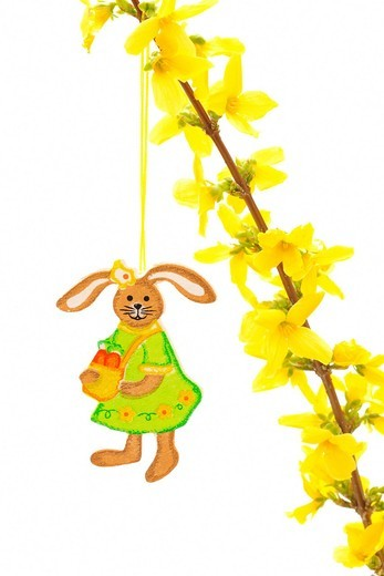 Easter decoration, pendant, Easter bunny hanging from forsythia twig : Stock Photo