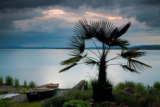 Palm tree with fishing boat and rain clouds in the evening light on Lake Constance, Reichenau, Baden_Wuerttemberg, Germany, Europe : Stock Photo