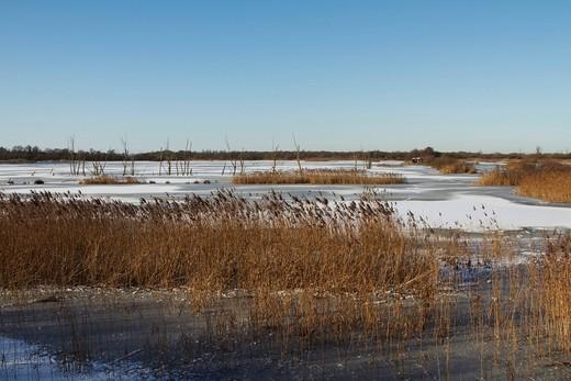 Noah´s Lake, winter, Shapwick Heath, Somerset, England, United Kingdom, Europe : Stock Photo