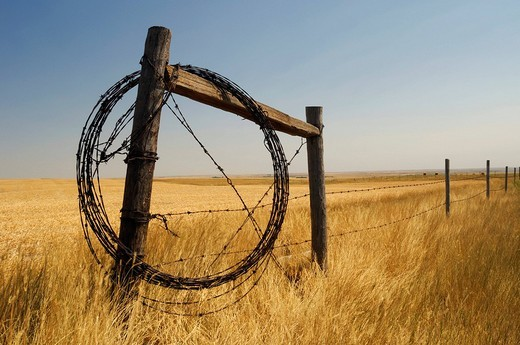 Barbed fence wire wrapped around farm fence for future repairs, Southern Saskatchewan near Grasslands National Park, Canada : Stock Photo
