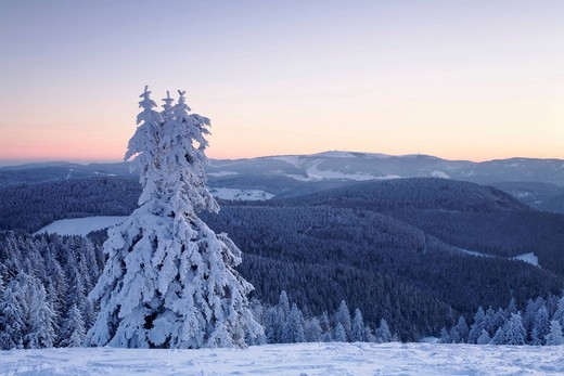 Stock Photo: 1848-482229 Snow covered trees on Belchen summit at sunrise, Black Forest, Baden_Wuerttemberg, Germany, Europe