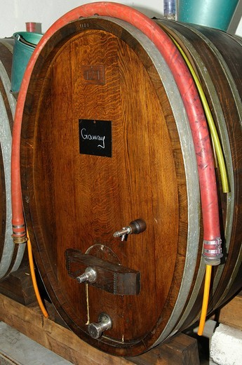 Oak wine barrel for Gamay red wine in a wine cellar, Luins, Vaud, Switzerland, Europe : Stock Photo