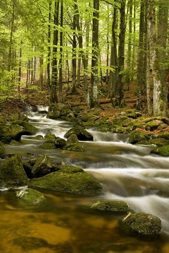 Stock Photo: 1848-484231 Kleine Ohe River, Bavarian Forest, Bavaria, Germany, Europe