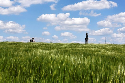 Field of barley, bike rider and church steeple of Lampoding, lake Waginger See, Chiemgau, Upper Bavaria, Germany, Europe : Stock Photo