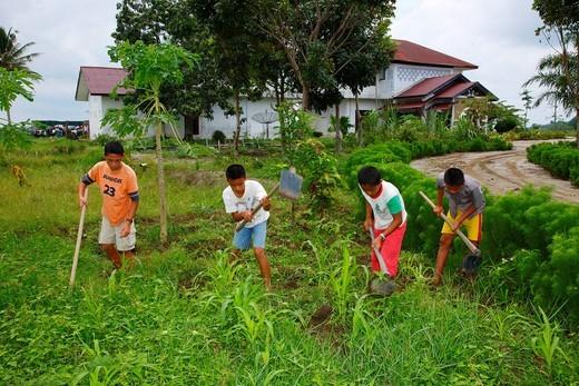 Stock Photo: 1848-485855 Children gardening in the vegetable garden, Margaritha children´s home, Marihat, Batak region, Sumatra island, Indonesia, Asia
