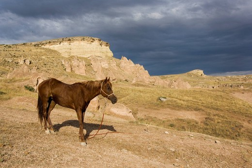 Stock Photo: 1848-487061 Horse in stormy atmosphere in tufa landscape, Cappadocia, central Anatolia, Turkey, Asia