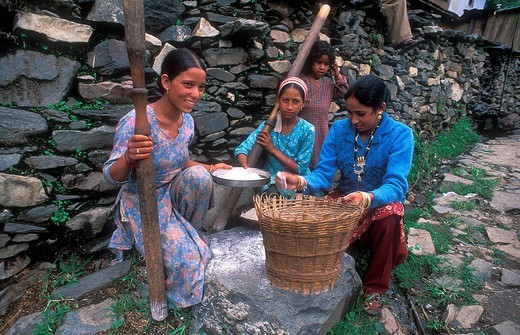 Three young girls pounding grain into flour with a mortar in a basket, Bhotia ethnic group, Garhwal Himalayas, India, Asia : Stock Photo