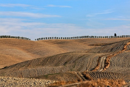 Rural landscape with hills, pathway, harvested fields and row of trees on horizon, Val d'Orcia Valley, UNESCO World Heritage Site, Tuscany, Italy, Europe : Stock Photo