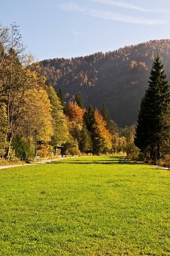 Autumn at the edge of the Alps, mixed forest in the sunlight, Kreuth, Upper Bavaria, Bavaria, Germany, Europe : Stock Photo