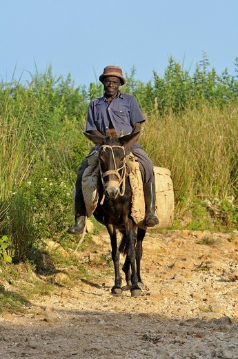 Stock Photo: 1848-491637 Man riding a donkey, village Coq Chante near Jacmel, Haiti, Caribbean, Central America