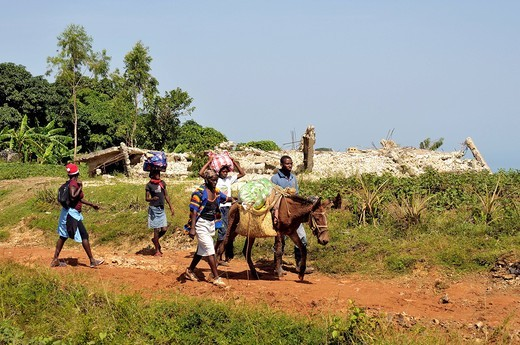 Stock Photo: 1848-491656 Earthquake refugees walking with a heavily loaded donkey past a house that was destroyed by the January 2010 earthquake, Jacmel, Haiti, Caribbean, Central America