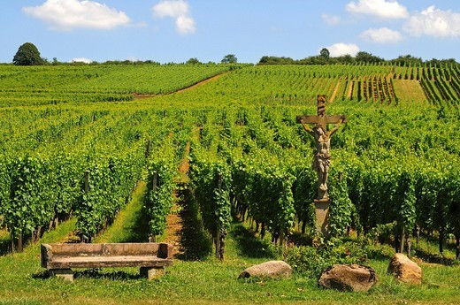 Vineyards on the Bollenberg hillside with stone crucifix, Orschwihr, Alsace, France, Europe : Stock Photo