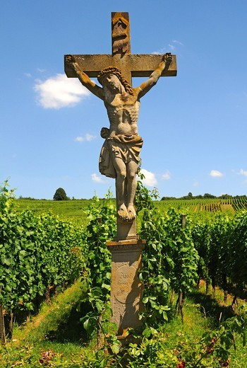 Stone crucifix in the vineyards of Orschwihr, Alsace, France, Europe : Stock Photo