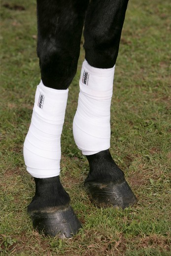 Dressage horse with bandages on its legs : Stock Photo