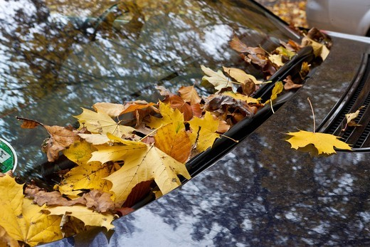 Autumn leaves behind the window wipers of a vehicle : Stock Photo