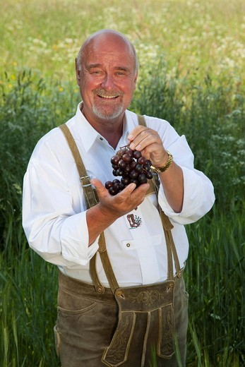 Elderly man wearing a traditional pair of trousers and holding grapes in his hands in a corn field : Stock Photo