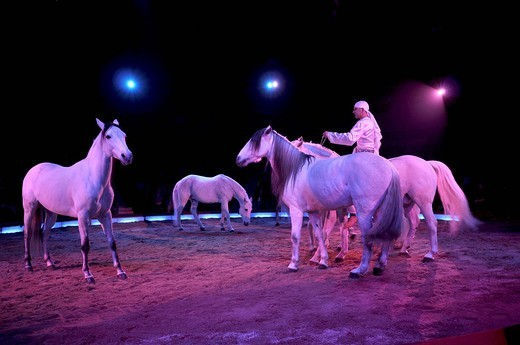 Stock Photo: 1848-496616 Dressage horses, Alex Giona of the Fratelli Giona with white Arab stallions, Circus Krone, Munich, Bavaria, Germany, Europe