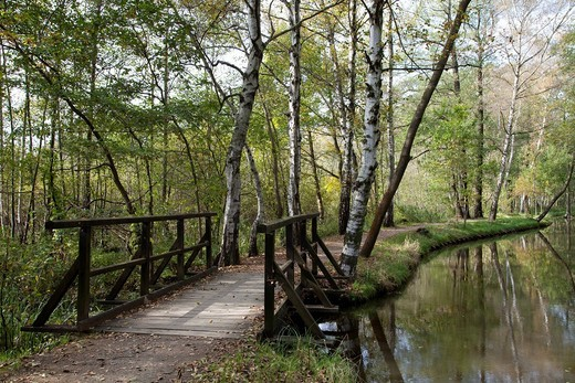 Stock Photo: 1848-497847 Boardwalk and trail along the Fliess River, Luebbenau, Spreewald Biosphere Reserve, Brandenburg, Germany, Europe