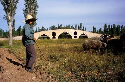 Shepherd, Iran : Stock Photo