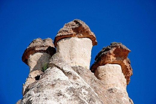 Stock Photo: 1848-500749 Tufa formations, Valley of the Monks Pasabagi_Valley near Goereme, Cappadocia, Anatolia, Turkey