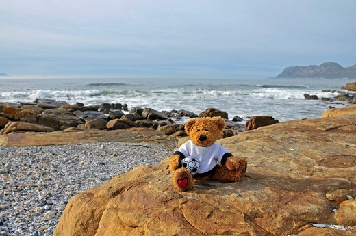 Stock Photo: 1848-502276 Teddy bear on St. James beach near Muizenberg, Falsebay, Somerset West, South Africa, Africa