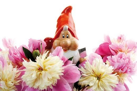 Stock Photo: 1848-52033 Garden gnome with peonies