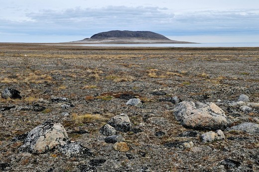 Arctic tundra and permafrost surface at Henry Kater Peninsula, Baffin Island, Nunavut, Canada, Arctic : Stock Photo