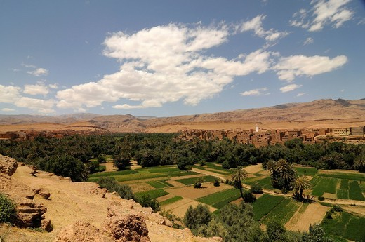 Desert village on the edge of the desert with an oasis at front, Morocco, Africa : Stock Photo
