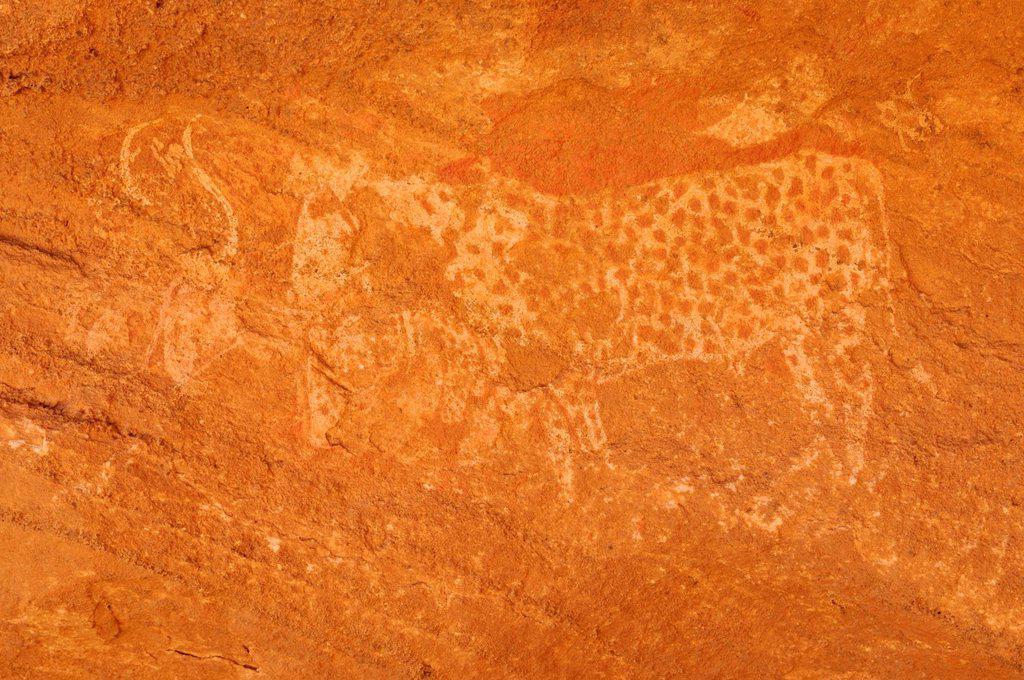 Rock engraving of a cow, neolithic rock art of Tasset Plateau, Tassili n´Ajjer National Park, Unesco World Heritage Site, Wilaya Illizi, Algeria, Sahara, North Africa, Africa : Stock Photo