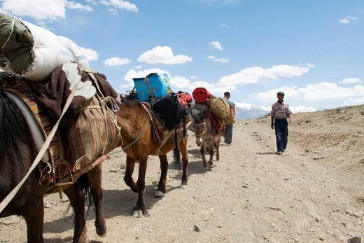 Two Tibetan guides and and their ponies trekking through the Himalayan region near Leh, from Spituk to Stok where they cross a 4900m high pass, Ladakh, Himalaya, India, Asia : Stock Photo