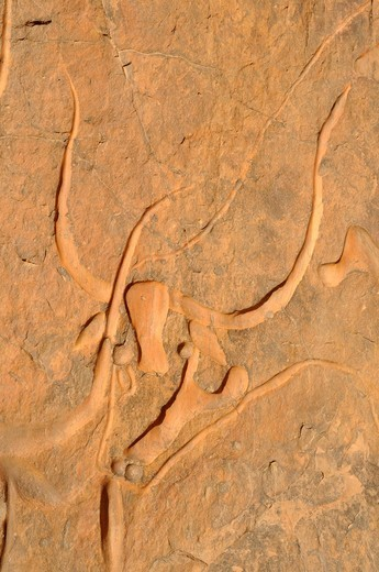 Rock engraving of a crying cow, neolithic rockart near Djanet, Tassili n´Ajjer National Park, Unesco World Heritage Site, Wilaya Illizi, Algeria, Sahara, North Africa, Africa : Stock Photo