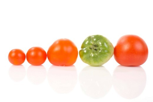 Stock Photo: 1848-538096 Different_size tomatoes in a row