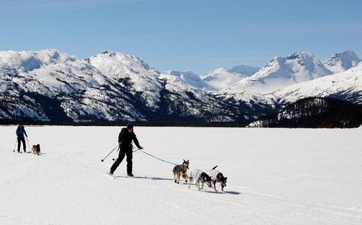 Two women skijoring, sled dogs pulling cross country skiers, dog sport, Alaskan Huskies, frozen Lake Lindeman, mountains behind, Coastal Range, Chilkoot Pass, Trail, Yukon Territory, British Columbia, Canada : Stock Photo