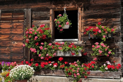 Window of a typical Valais house adorned with flowers, Geschinen, canton of Valais, Switzerland, Europe : Stock Photo