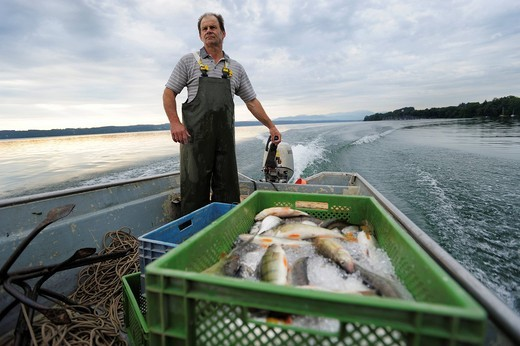 Stock Photo: 1848-543338 The fisherman Johann Strobl casting for fish on Lake Starnberg, Fuenfseenland area, Upper Bavaria, Bavaria, Germany, Europe