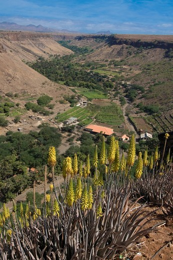 Stock Photo: 1848-543580 View over valley and blooms, Ciudad Velha, Cidade Velha, island of Santiago, Cabo Verde, Africa