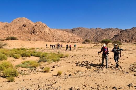 Group of tourists hiking through granite landscape, Hoggar, Ahaggar Mountains, Wilaya Tamanrasset, Algeria, Sahara, North Africa, Africa : Stock Photo
