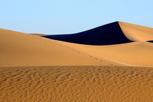Morning light at the Mesquite Sand Dunes, Death Valley National Park, California, USA, America : Stock Photo
